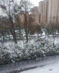 今天又下雪了!